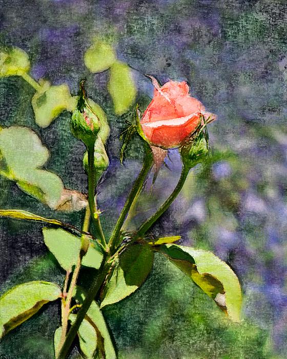 Rose Digital Art - Rose Elegance Art by Sherry  Curry