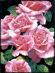 Watercolor Painting - Rose Rose Roses by Diana Miller-pierce