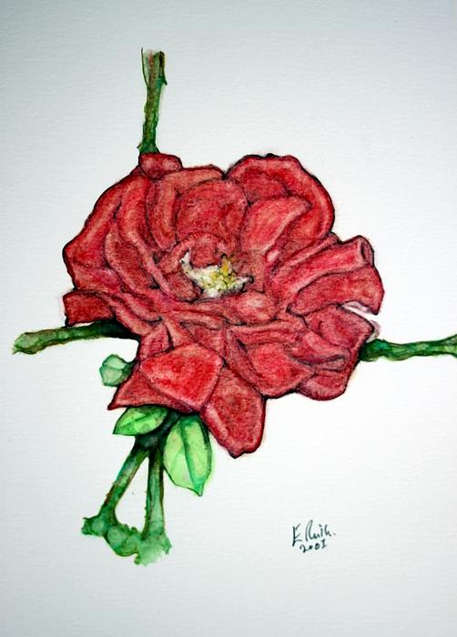 Rose Drawing - Rose Study No 1 by Edward Ruth