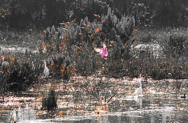 Juno Photograph - Roseate Spoonbill Select Color by Ken Figurski