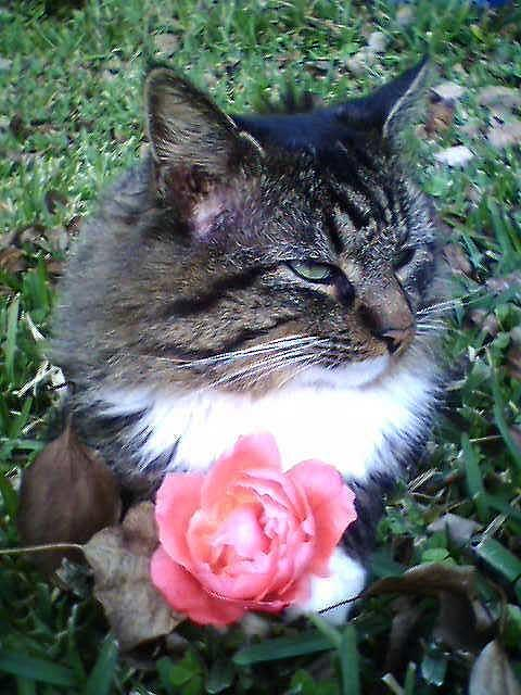 Cat Photograph - Rosey Kitty by Crystal  Rickman