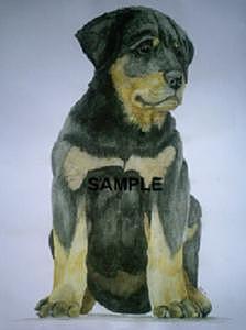 Rottweiler Puppy Painting - Rottweiler Puppy by Billie Riholm