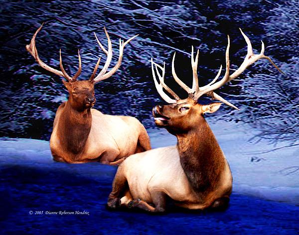 Alaska Photograph - Royal Elk by Dianne Roberson