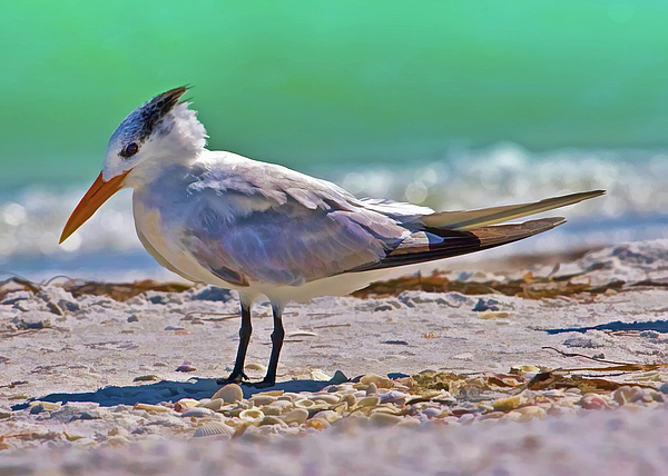 Birds Photograph - Royal Stance by Delores Knowles