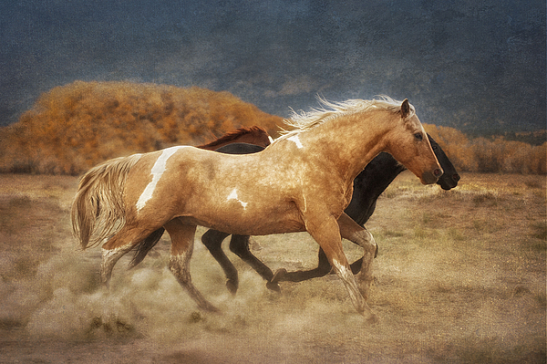 Landscape Photograph - Running Free by Heather Swan