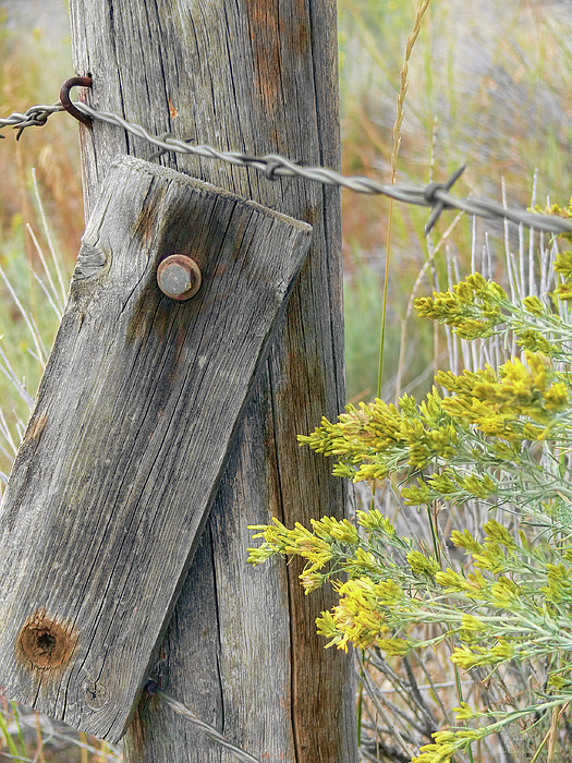 Fence Photograph - Rustic Fence And Wild Flowers Montana by Jennie Marie Schell