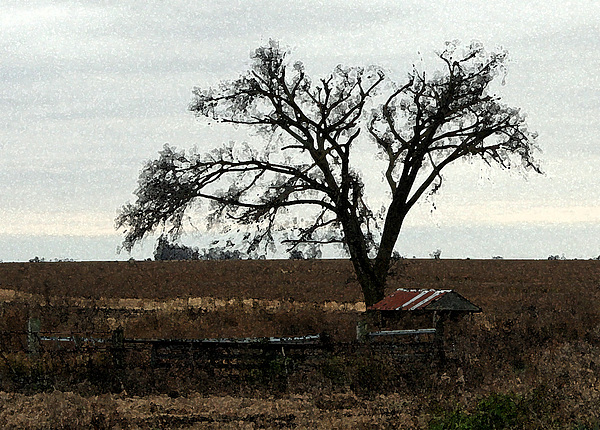 Farm Photograph - Rustic by Rodger Mansfield