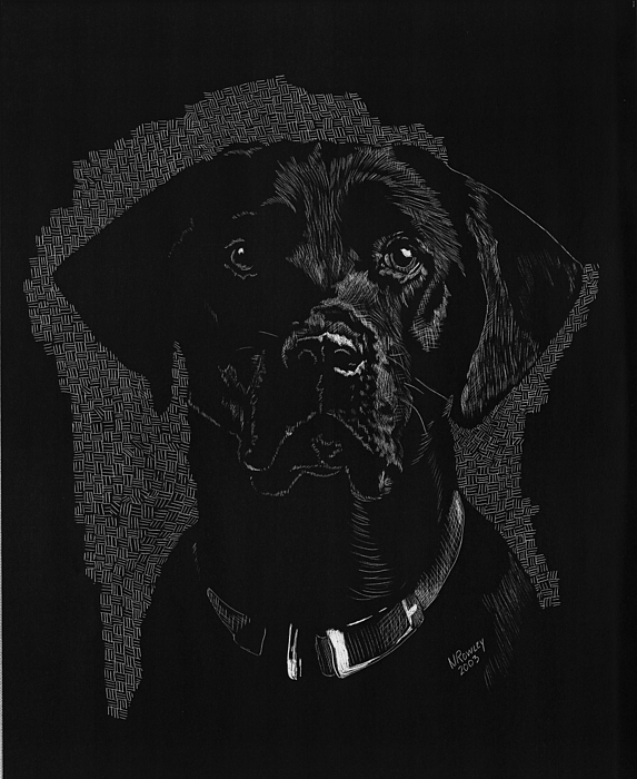 Scratchboard Drawing - Sadie by Norma Rowley