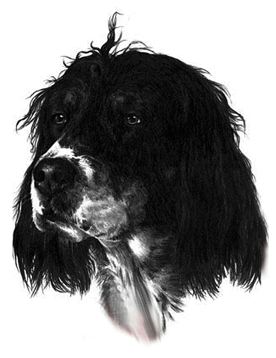 Portrait Drawing - Sadie by Rachel Christine Nowicki