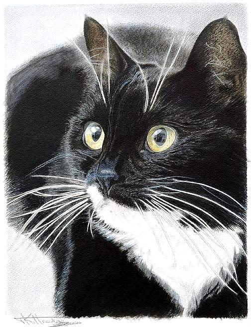 Pet Painting - Sadie by Tricia Kittredge