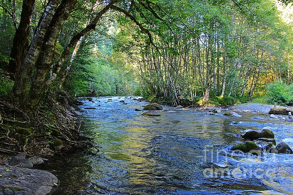 Tim Rice Photograph - Salmon Creek Majestic  by Tim Rice