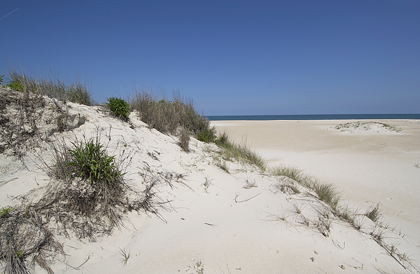 Beach Photograph - Sand Dunes On Assateague Island National Seashore - Maryland by Brendan Reals