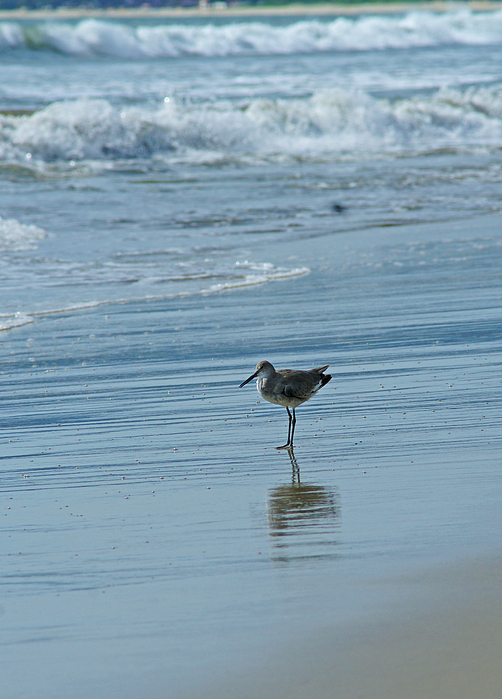 Sandpiper Photograph - Sandpiper On The Beach by Randy Harris