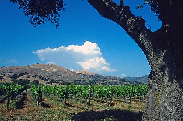 Landscape Photograph - Santa Ynez Vineyard View by Kathy Yates