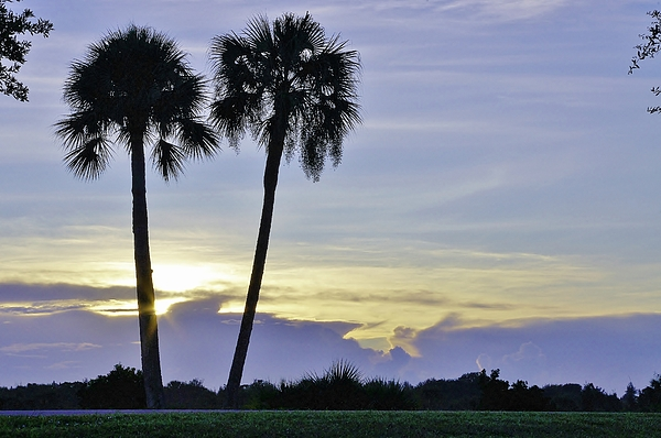 Palms Photograph - Savanna Sunrise by Don Youngclaus