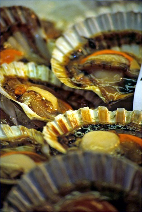 Venice Photograph - Scallops At Rialto Market In Venice by Michael Henderson