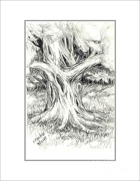 Drawing Drawing - Scary Tree by Ruth Renshaw