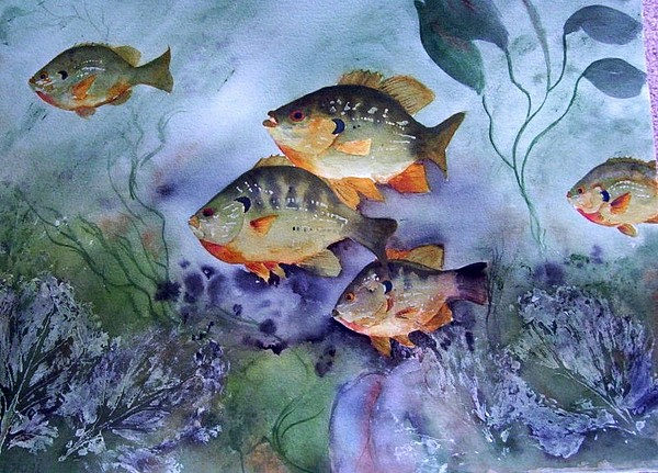 Original Painting - Schools Out - Bluegills by Audrey Bunchkowski