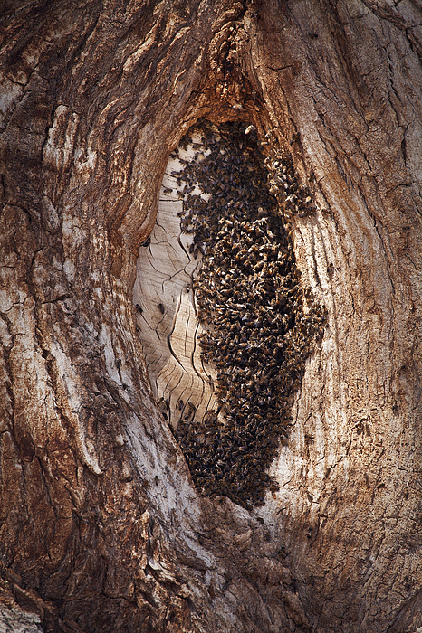 Bees Photograph - Scottys Bees by Greg Clure