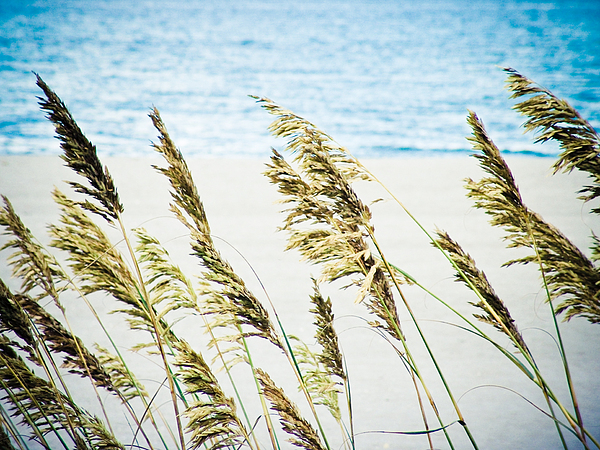 Sea Photograph - Sea Oats by Tonya Laker