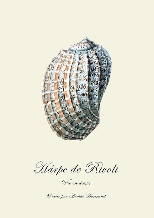 Sea Shell Drawing - Sea Shell by Patruschka Hetterschij