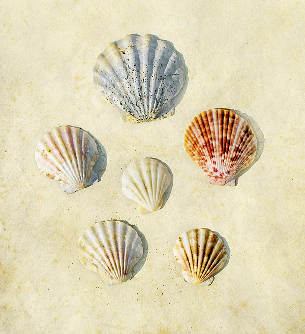 Six Photograph - Sea Shells by Paul Grand