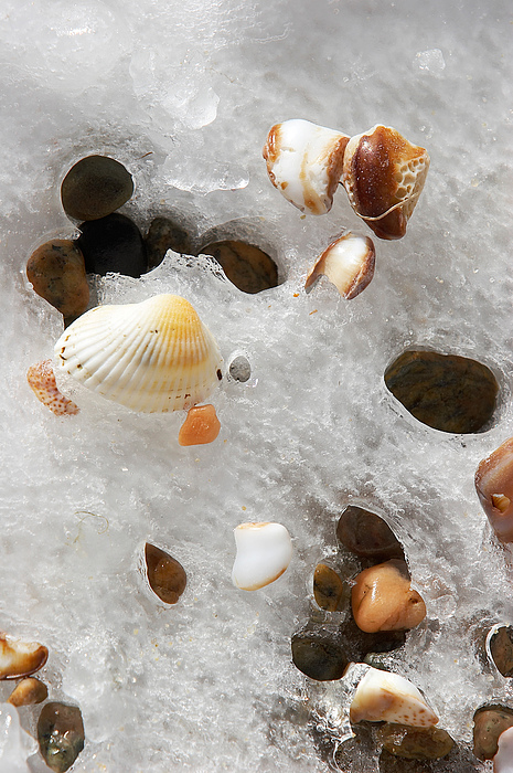 Sea Shells Photograph - Sea Shells Rocks And Ice by Matt Suess