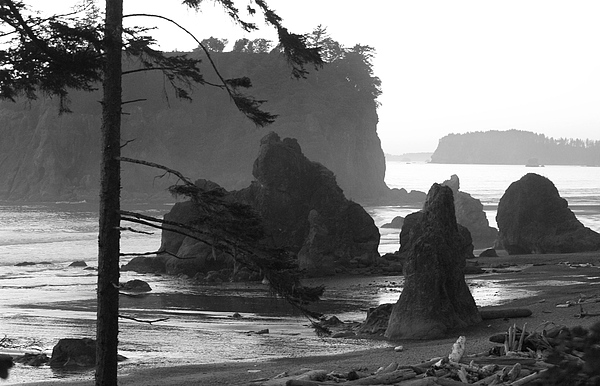 Olympic Peninsula Photograph - Sea Stacks by Sonja Anderson