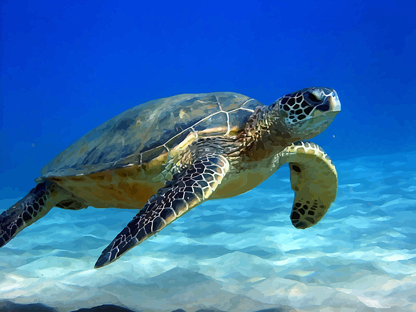 Turtle Photograph - Sea Turtle Blue by Peter Oconor