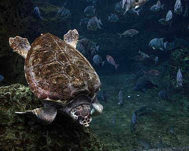 Sea Turtle Photograph by James Davidson
