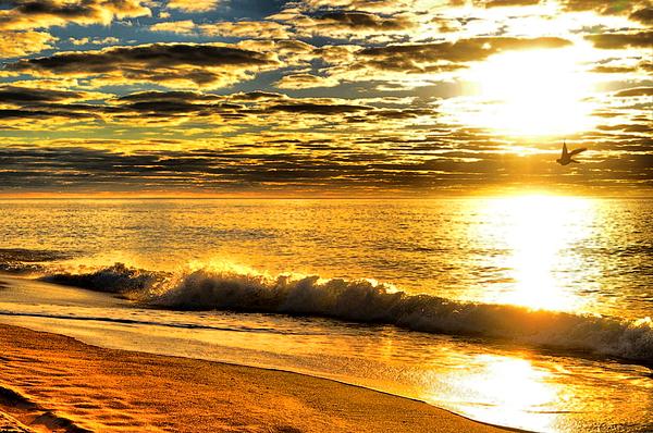 Beach Photograph - Seagull Sunrise by Emily Stauring