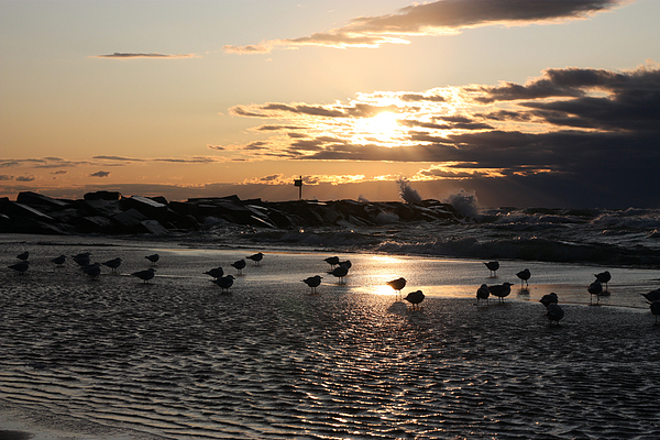 Horizontal Photograph - Seagulls In The Surf At Sunset by Christopher Purcell