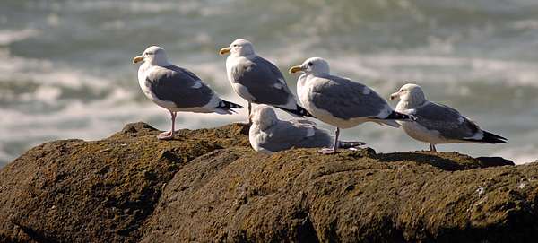 Bird Photograph - Seaguls by Curtis Gibson