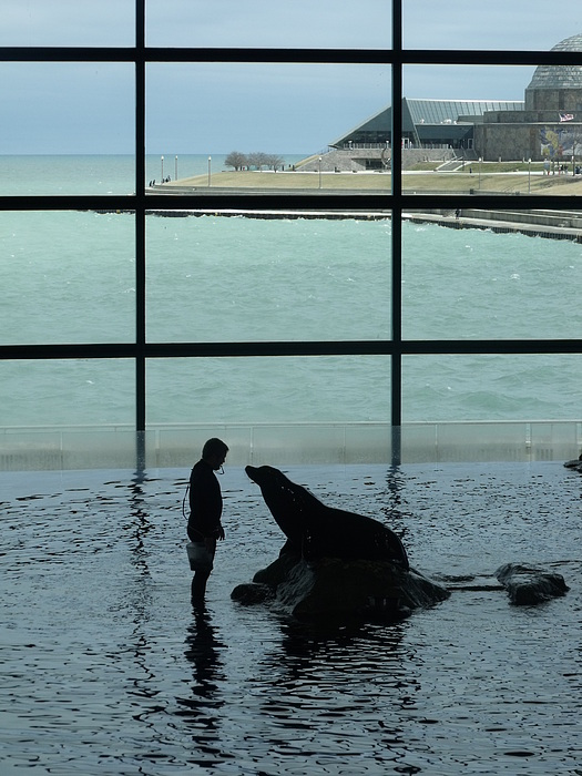 Sea Lion Photograph - Seal Lion I by Anna Villarreal Garbis