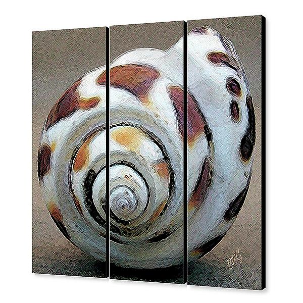 Seashell Photograph - Seashells Spectacular No 2 - Triptych by Ben and Raisa Gertsberg