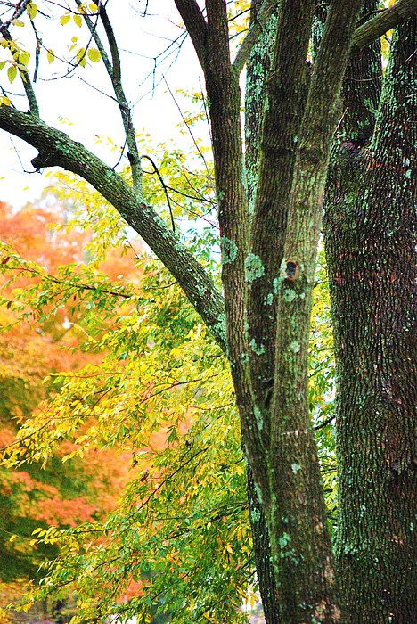 Trees Photograph - Seasons by Trudi Southerland