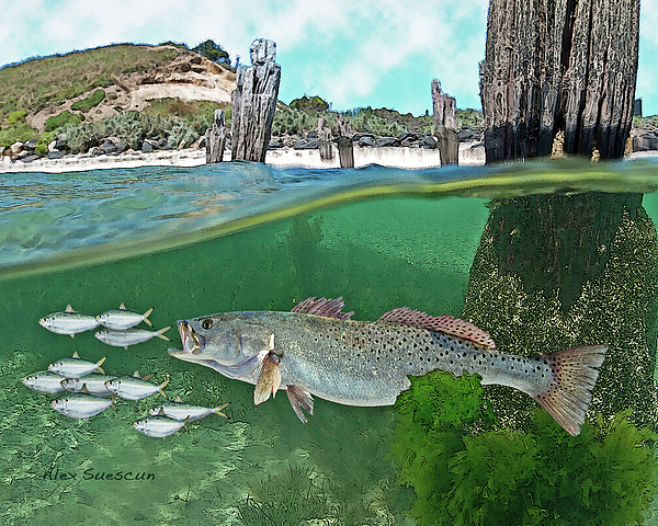 Bonefish Painting - Seatrout Attack by Alex Suescun