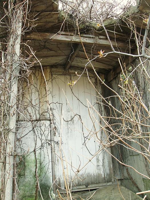 Secret Door Photograph by Todd Sherlock