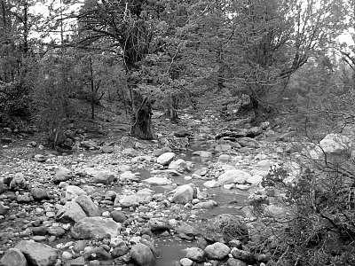 Sedona Photograph - Sedona Path by Kevin Igo