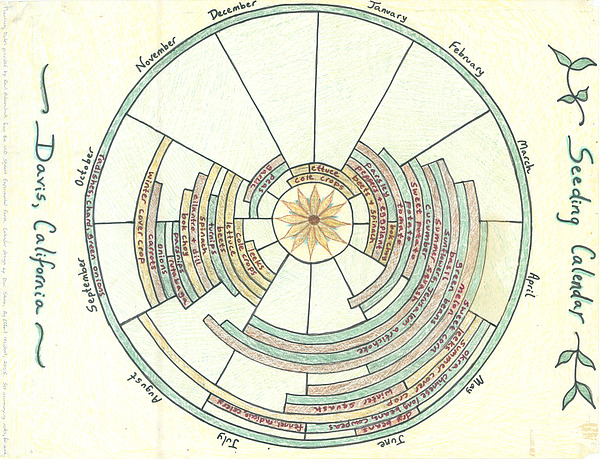Seed Calendar Mandala Drawing by Lynn Sarraille for