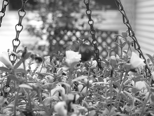 Flower Photograph - Seeking Gloria by Paige Smith