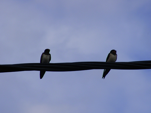 Birds Photograph - Separated Couple by Wilma Stout