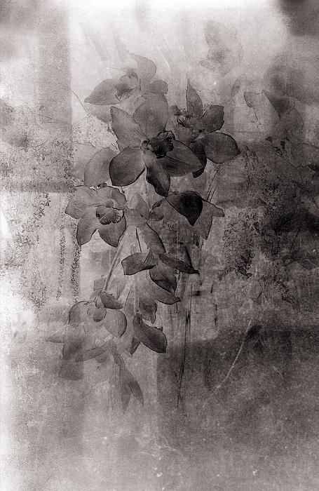 Flower Photograph - Serenade by Susanne Van Hulst