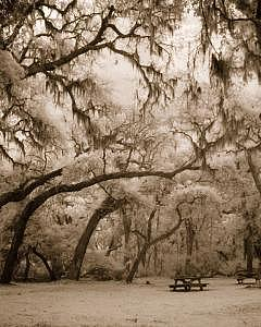 Serene Picnic Photograph by James Davidson