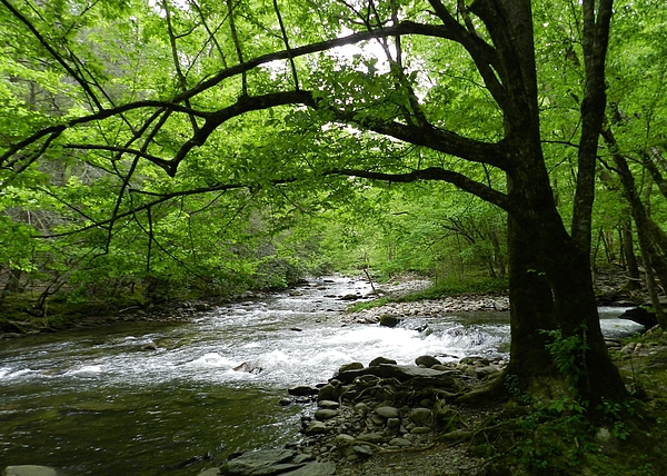 First name Last name - Tennessee Mountain stream
