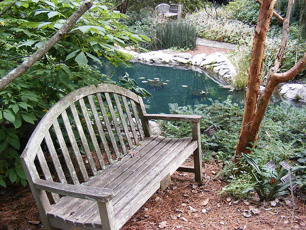 Bench Photograph - Serenity  by James and Vickie Rankin