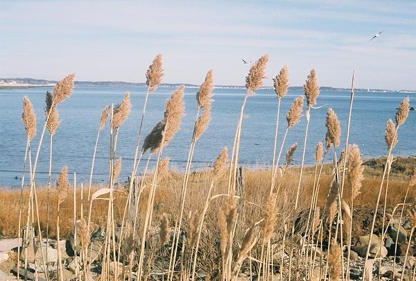 Ocean Photograph - Serenity by Kathy Bradley