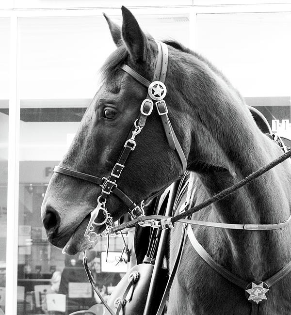 Black And White Photograph - Sergeant Ed II by Jason Leonti