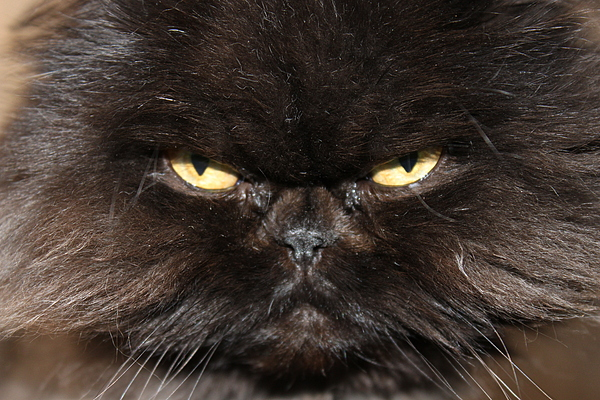 Cat Photograph - Seriously by Angie Wingerd