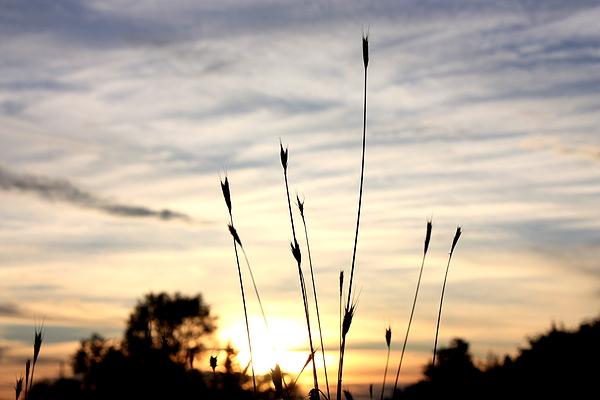 Nature Photograph - Setting Grass Part 3 by Joseph Peterson